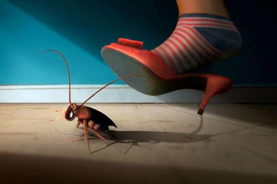 Тараканы в подъезде вашего дома: что делать и куда обращаться?