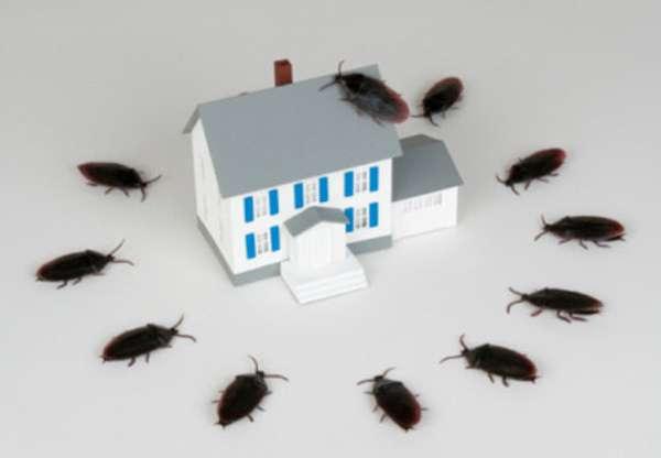 маленькие тараканы и способы избавления