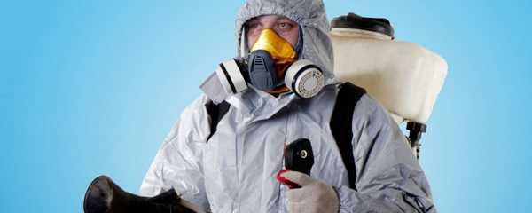 Дезинсекция от клопов: метод холодного и горячего тумана