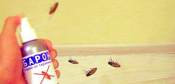 Эффективность средства от тараканов Барон