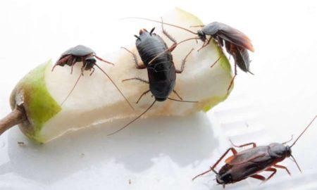 в квартире появились тараканы