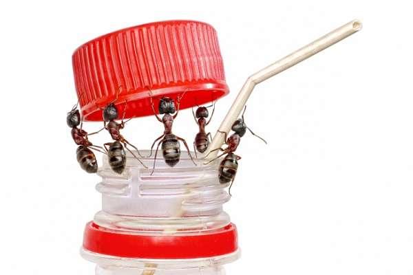 народные средства от муравьев в доме
