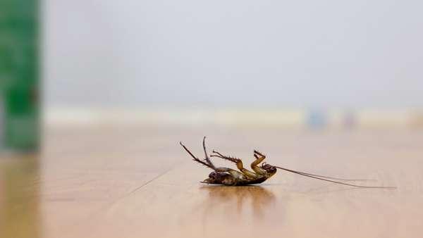 Эффективные средства против тараканов