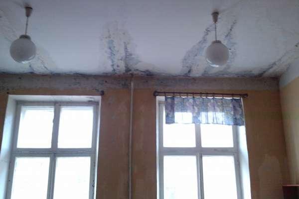 Мокрицы заводятся на последних этажах, если течет крыша