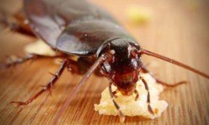 Что делать, если завелись на кухне тараканы