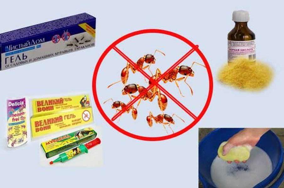 Как избавиться от муравьев в доме навсегда: народные средства и препараты