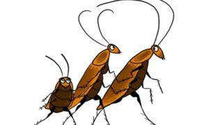 Эффективные способы избавиться от тараканов в общежитии