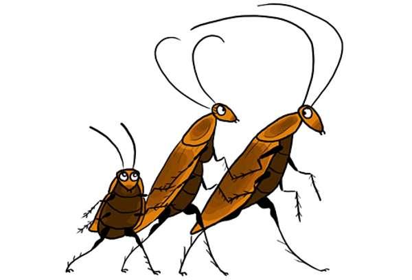 Как называют тараканов