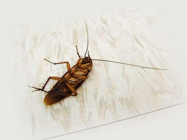 профилактика тараканов в квартире