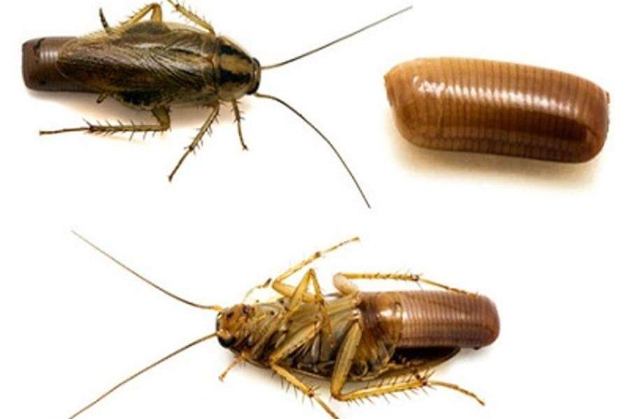 Архимандрит: таракан - друг человека