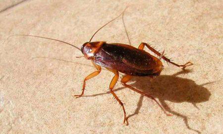 откуда берутся тараканы в квартире