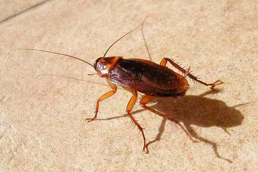 Откуда в квартире могут появиться тараканы