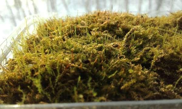 Ловушка для мокриц из моха