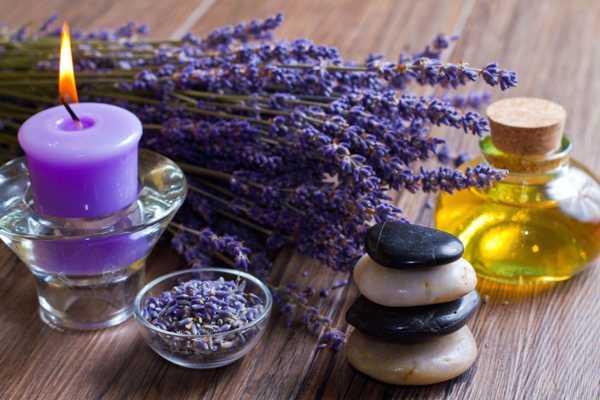 Как лавандовое масло помогает избавиться от бельевых вшей