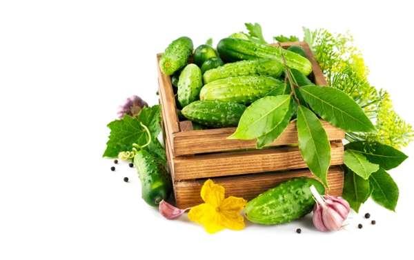 Рецепт салата из лаврушки и огурцов от тараканов