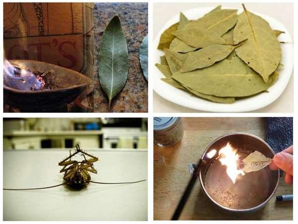 Народные методы: лавровый лист от тараканов