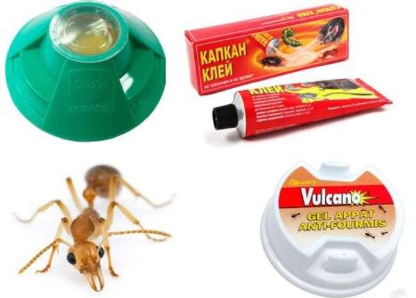 Ловушки для муравьев