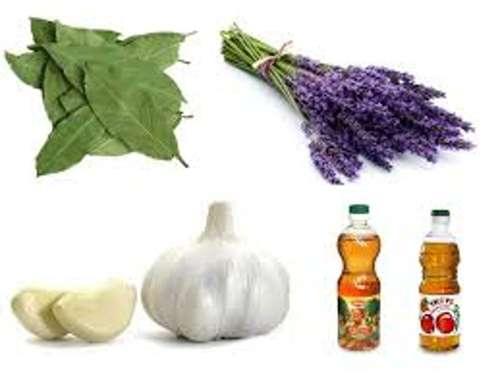 Народные средства избавления от пищевой моли