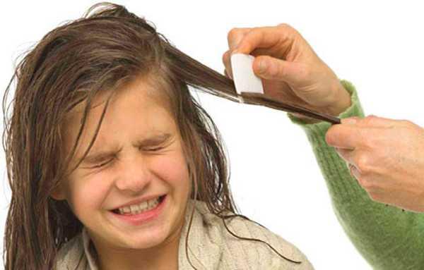 Необходимо регулярно осматривать голову ребенка на предмет наличия вшей и гнид