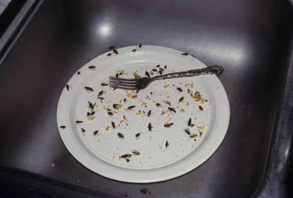 Тараканов привлекают остатки еды
