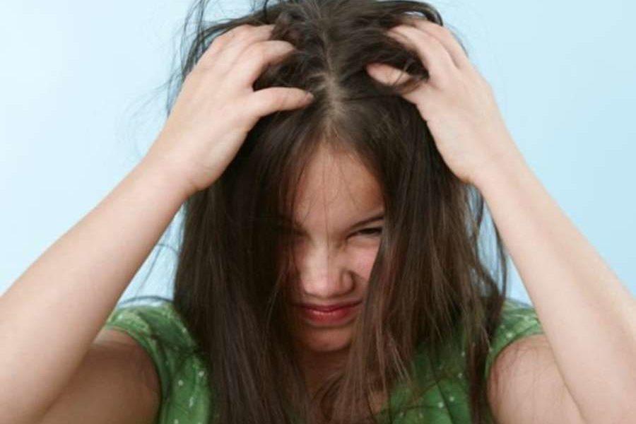 От чего и почему появляются вши на голове у человека – основные причины