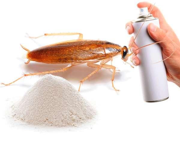 Уничтожение тараканов без запаха