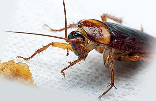 Средства от тараканов в общежитии