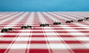 чего боятся муравьи