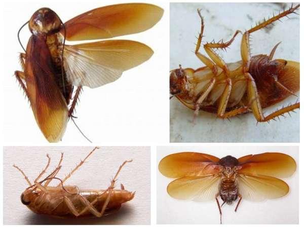 Летают тараканы или нет