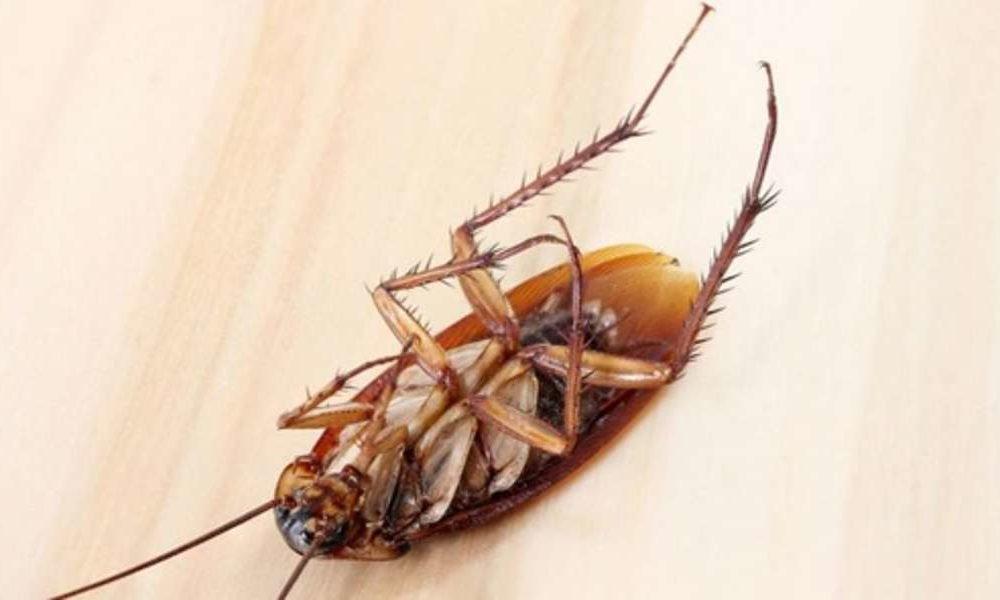Чем травить тараканов в домашних условиях в квартире или доме лучше всего?