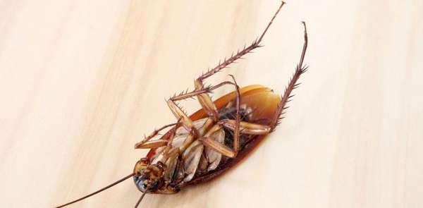 Чем травить тараканов в домашних условиях