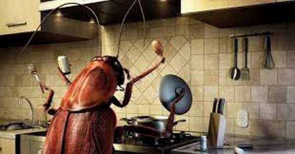 Тараканы не только на кухне, но и по всей квартире