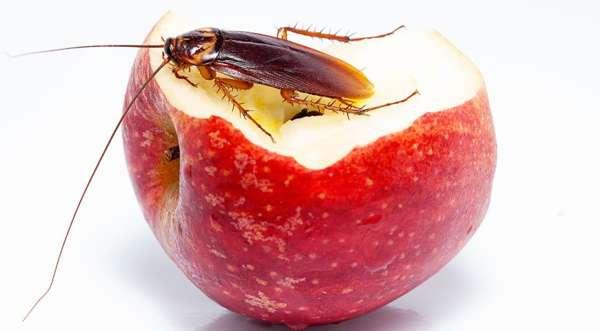 Чтобы не было тараканов, нужно тщательно убирать