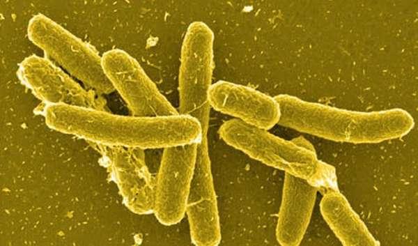 Инфекции, переносимые прусаками