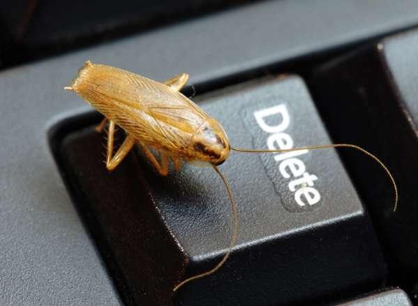 Тараканы - причина поломки и возгорания техники