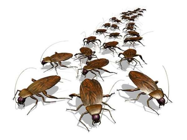 Тараканы любят места, где есть влага