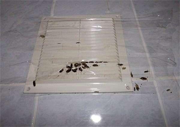 Тараканы проникают в квартиру через вентиляционную решетку