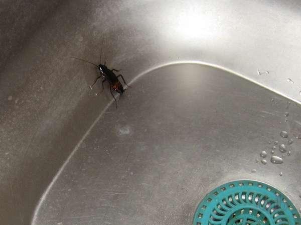Даже в самой чистой мойке могут ползать тараканы