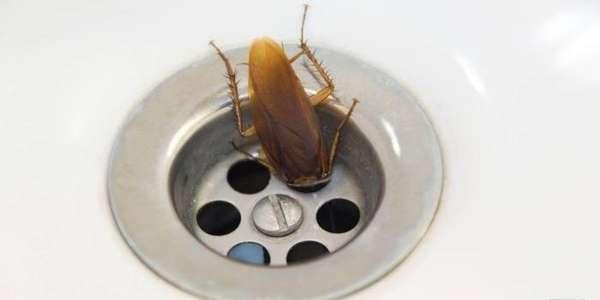 Места обитания тараканов в квартире