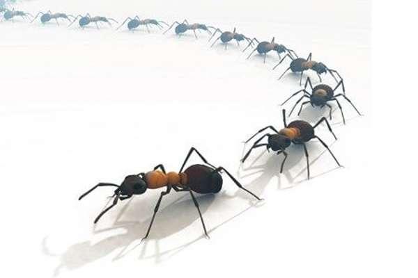 Уничтожение муравьев в квартире и доме эффективными методами