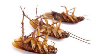 Как быстро и навсегда вывести тараканов