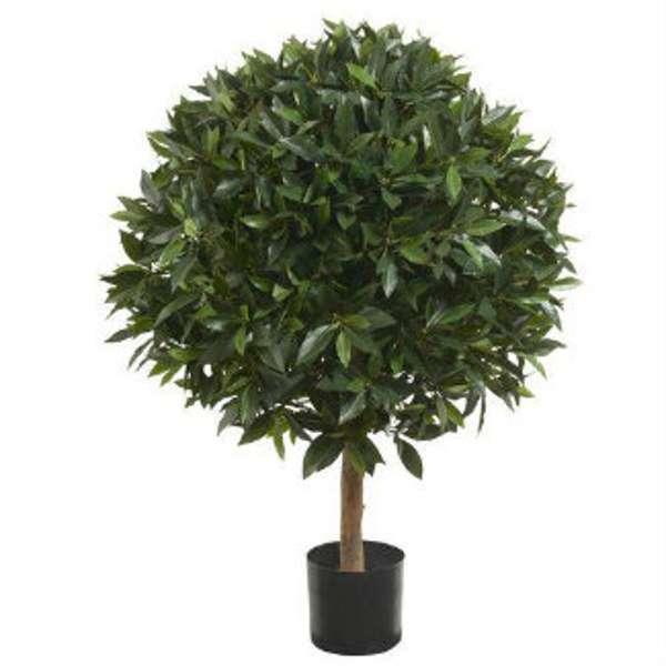Полезные советы в борьбе с прусаками: лавровое дерево