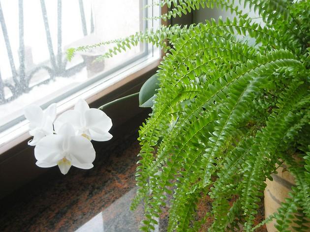 Цветы, которые отпугивают тараканов и помогают их вывести