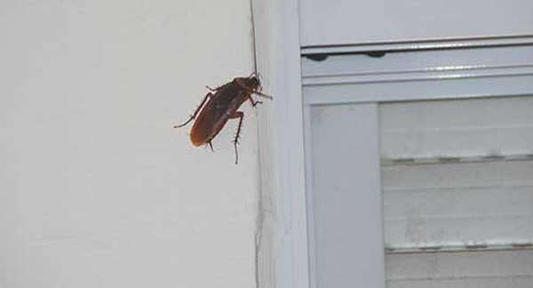 Тараканы живут под обшивкой холодильника