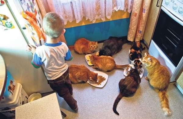 Особенности препарата: нетоксичен для детей и животных